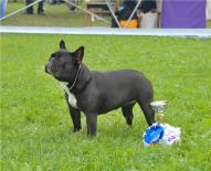 Coco Chanell De Elka Gyvybes Zyme(kennel Vital Way)