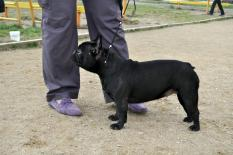Vital Way Brune Brulante kennel Vital Way