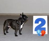 Viviata De Elka Gyvybes Zyme The French bulldog of kennel Vital Way at an Show