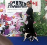 Vital Way Beaute Blanc et Noire( french bulldog of kennel Vital Way)