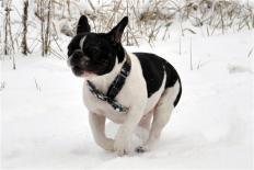 Vital Way Beaute Blanc et Noire (Vital Way kennel)